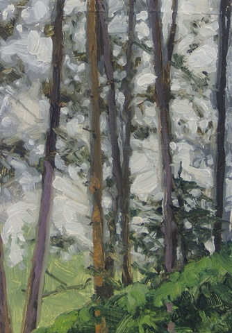 houghton pines II