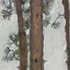 houghton pines III