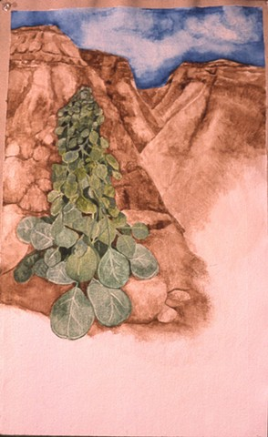 watercolor painting caper bush growing from side of Nahal Hever, Israel