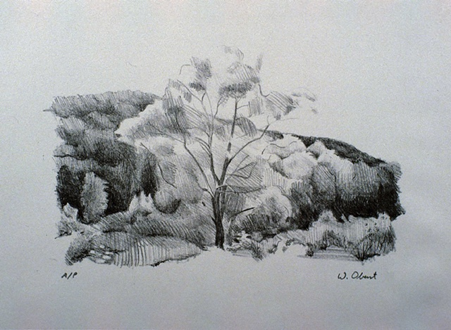 Tree With Hill