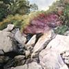Rocks and Brush