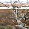 East End Tree