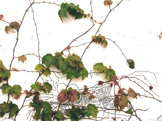 Topography of Ivy