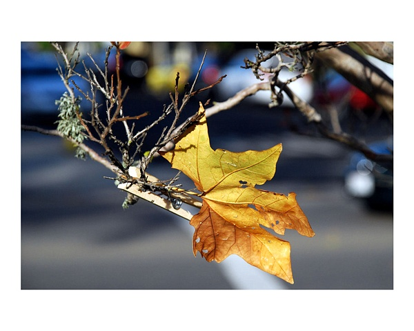 Traffic Leaf