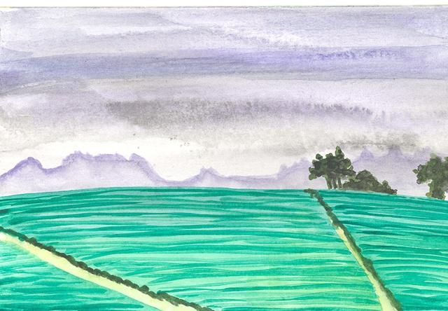 Fields in Santa Cruz