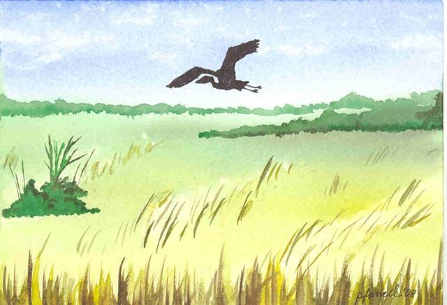 Florida Everglades with Heron