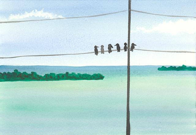 Key West Birds