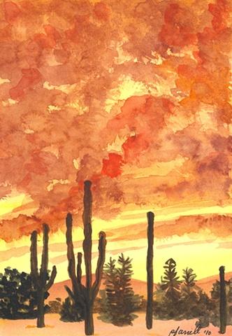 Los Cabos Cacti