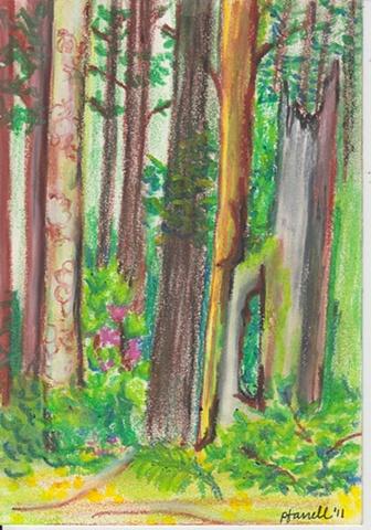 Mendocino Forest