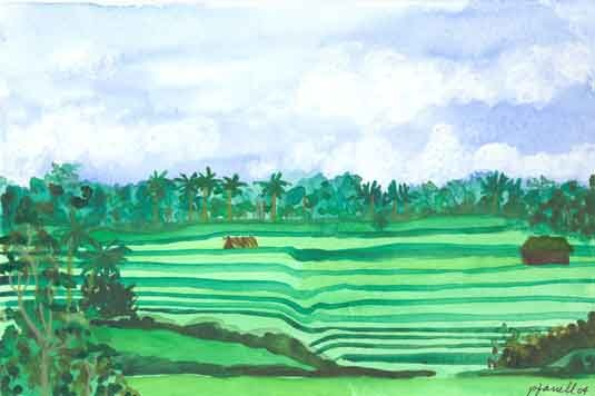 Rice Fields Campujan
