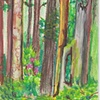 pastel Mendocino Forest