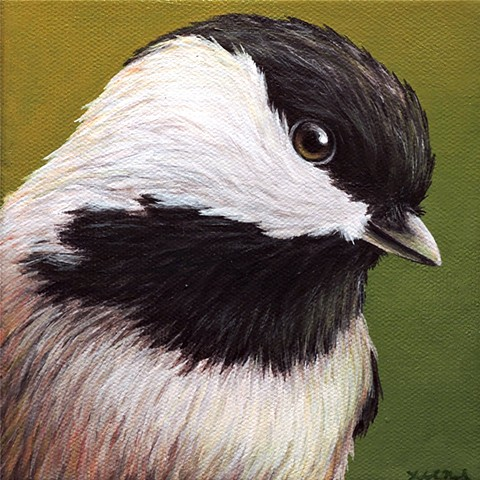 Chickadee portrait #3