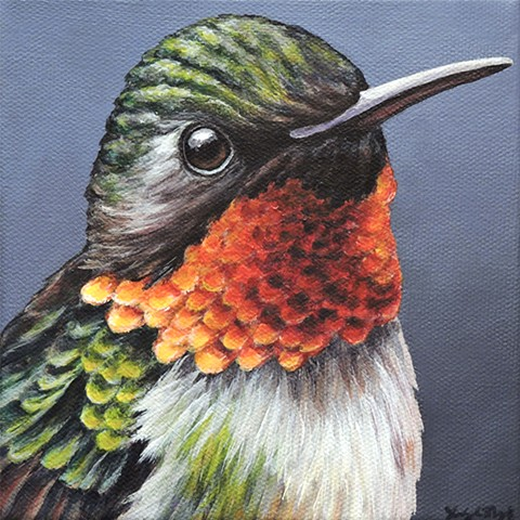 Ruby-Throated Hummingbird portrait #3
