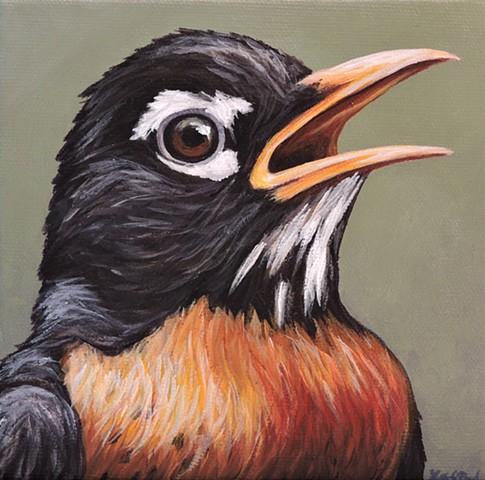 Robin portrait #2