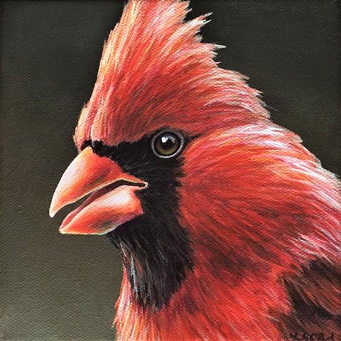 Cardinal portrait #14