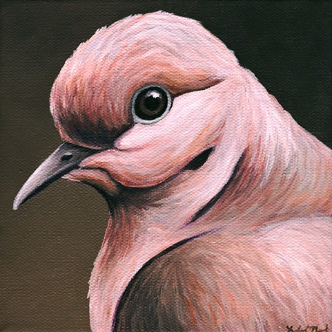 Mourning Dove portrait #3