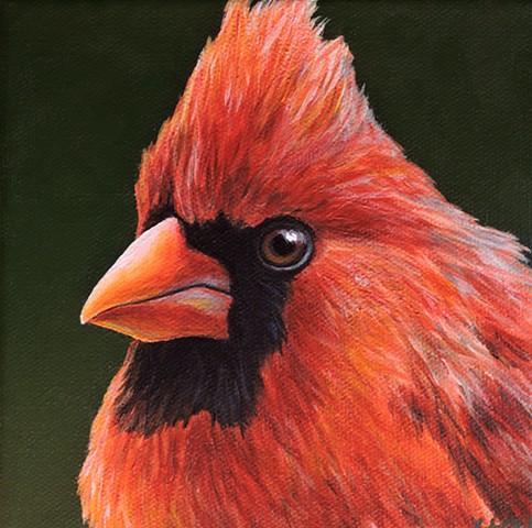 Cardinal portrait #6