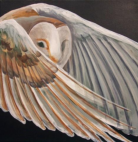Barn Owl in flight (step 3)