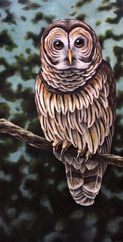 Barred Owl #2