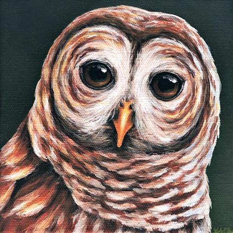 Barred Owl portrait #4