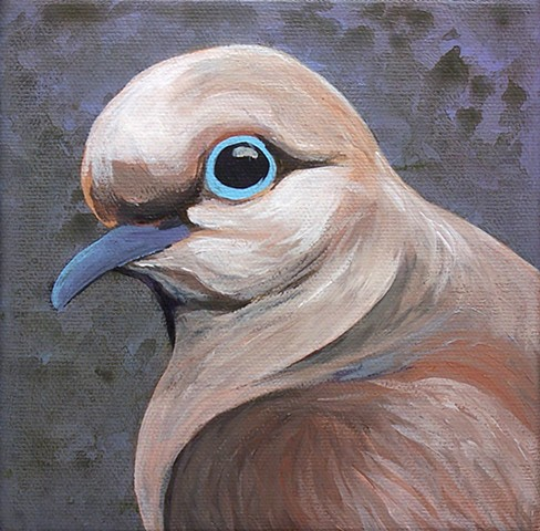 Mourning Dove portrait #1 (step 3)