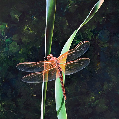 Dragonfly on Blade of Grass #10