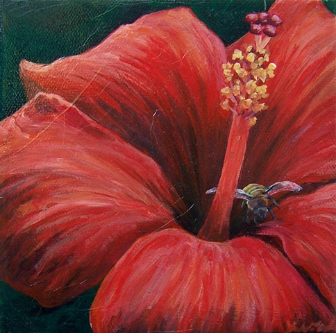Bee and Red Hibiscus #2