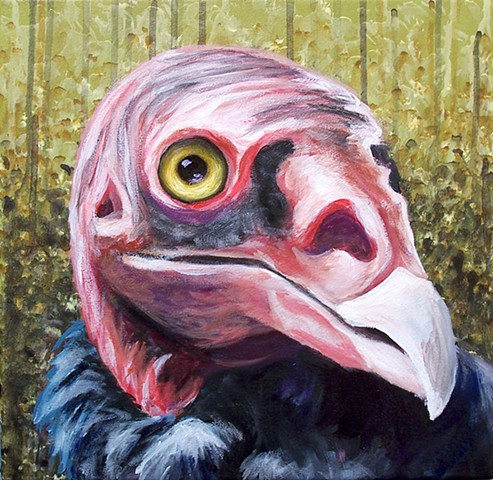 Turkey Vulture portrait (step 8)