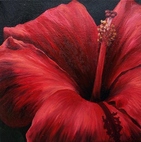 Rose Hibiscus #2