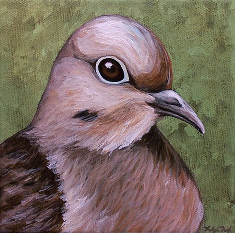 Mourning Dove portrait #2