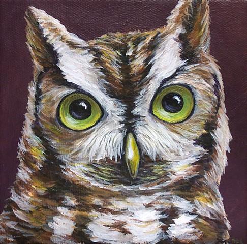 Screech Owl portrait #2