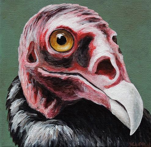 Turkey Vulture portrait #2