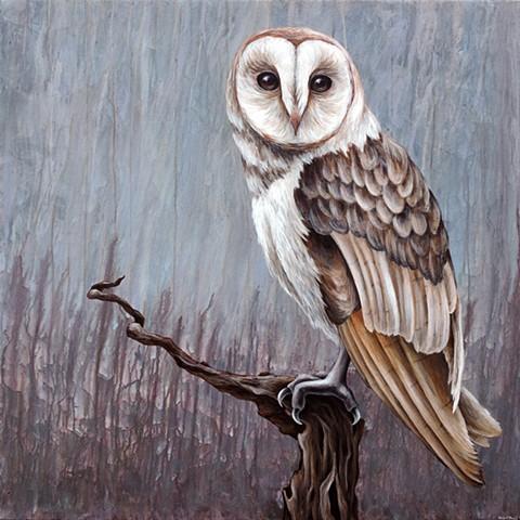 Barn Owl #2 (perched)