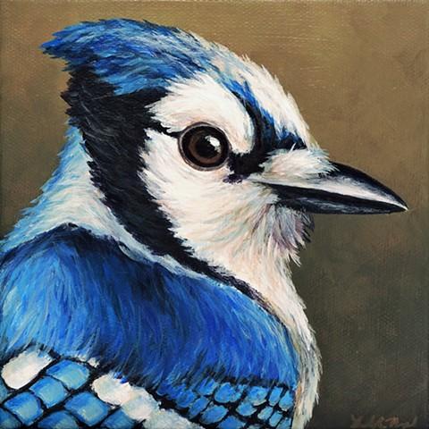 Blue Jay portrait #3