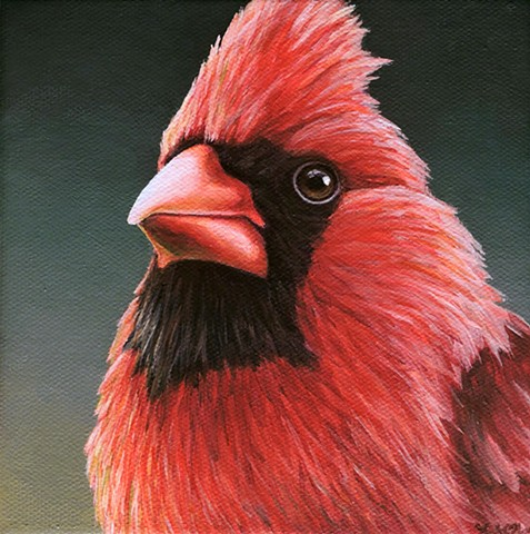 Cardinal portrait #16
