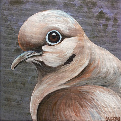 Mourning Dove portrait #1 (step 4/ finished)