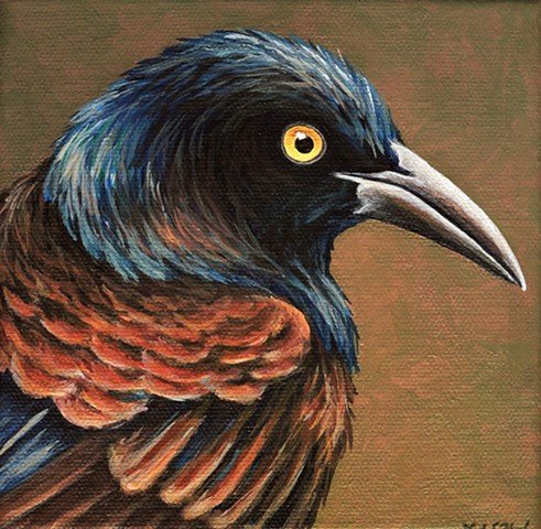 Grackle portrait