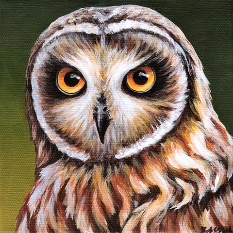 Short-Eared Owl portrait #2