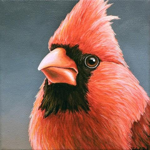 Cardinal portrait #17