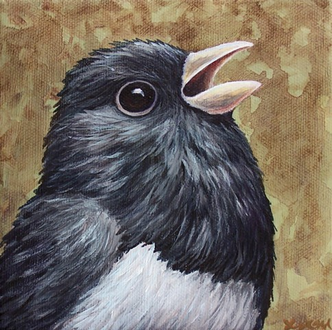 Junco portrait