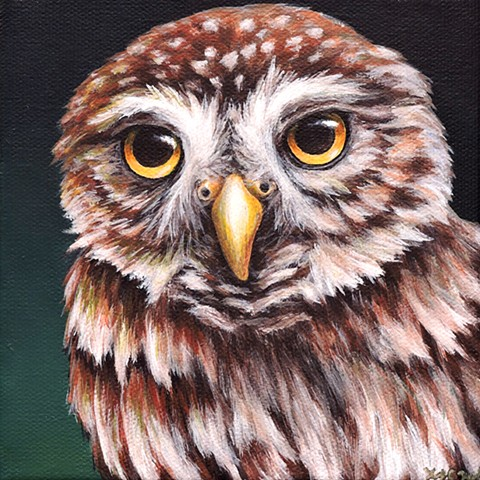 Northern Pygmy Owl portrait