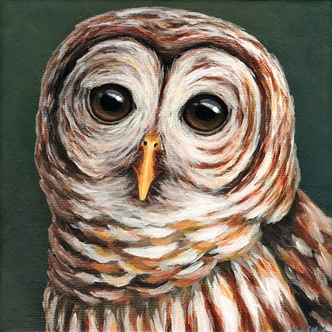 Barred Owl portrait #3