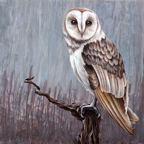 Barn Owl #2 (perched)  (step 9/9- finished)