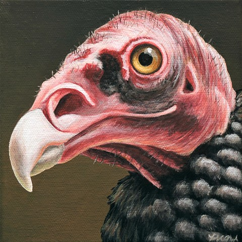 Turkey Vulture portrait #3