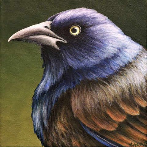 Grackle portrait #2