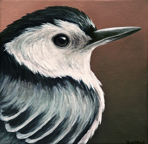 Nuthatch portrait #2