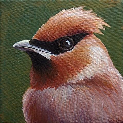 Cedar Waxwing portrait