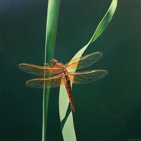 Dragonfly on Blade of Grass #9