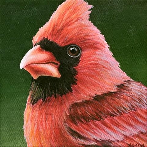 Cardinal portrait #19