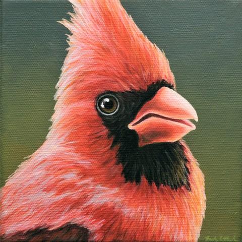 Cardinal portrait #18